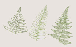 Botanical sketch Stock Images