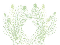 Botanical vector background Royalty Free Stock Image