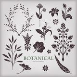 Botanical vector elements Stock Photos