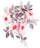 Botanical watercolor painting with white rose bush in blossom vector illustration