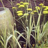 Botanicals Royalty Free Stock Images