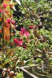 Botanicals tropical Fotografia de Stock