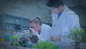 Botanici in un laboratorio stock footage