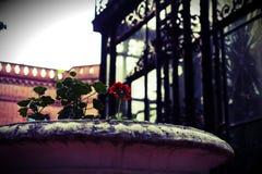 Botanico Карлос Thays Jardin Стоковые Изображения RF