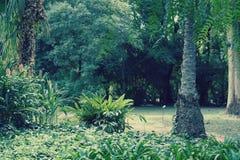 Botanico Carlos Thays Jardin Στοκ Εικόνες