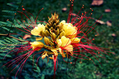 Botanico Carlos Thays Jardin Στοκ φωτογραφίες με δικαίωμα ελεύθερης χρήσης