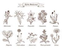 Botaniczna ilustracja ilustracja wektor
