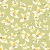 Botanicznej akwareli bezszwowy wzór Kwiaty i pączki Philadelphus Może używać tworzyć ślubnych zaproszenia i druki f Fotografia Stock