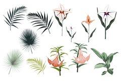Botaniczni Wektorowi elementy: ficus elastica, tropikalne leluje, orchidea kwiaty i palma liście, royalty ilustracja