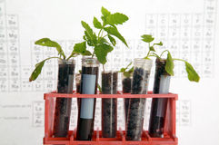 botaniczny badanie Obrazy Stock