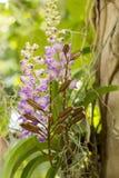 botaniczny, botanika, bukiet, gałąź czysta, jaskrawy, pączkowy, zakończenie Zdjęcia Stock