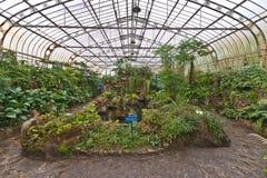 botaniczny Brazil uprawia ogródek Paulo szklarnianego sao obrazy stock