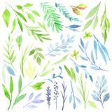 Botaniczny clipart Set zieleń opuszcza, ziele i gałąź elementy kwieciści projektów Doskonalić dla ślubnych zaproszeń ilustracja wektor
