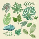 Botaniczny clipart Ustawiający Zieleni liście, tropikalne rośliny ilustracja wektor