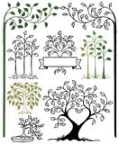 Botaniczny drzewo set Obrazy Royalty Free