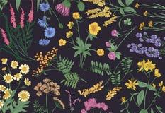 Botaniczny horyzontalny tło z kwitnąć dzikich kwiaty, lat łąkowych kwiatonośnych ziele i wspaniałe zielne rośliny, ilustracja wektor