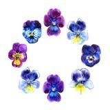 Botaniczny nakreślenie akwarela Screensaver pansies Pansy kwiatów rama Obraz Royalty Free