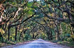 Botanik-Bucht-Plantagen-gespenstische Schotterweg-Marsh Oak Trees Tunnel wi stockbilder
