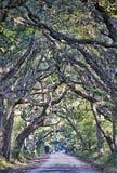 Botanik-Bucht-Plantagen-gespenstische Schotterweg-Marsh Oak Trees Tunnel wi Stockfotografie