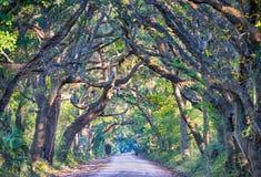 Botanik-Bucht-Plantagen-gespenstische Schotterweg-Marsh Oak Trees Tunnel wi Stockbild
