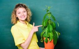 Botanika jest o rośliien ziele i kwiatach Bierze dobre opiek rośliny Kwiaciarni poj?cie Dziewczyna chwyta roślina w garnku Roślin zdjęcie stock