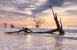 Botanikfjärd Boneyard Charleston South Carolina Coast Royaltyfri Bild