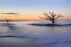 Botanikfjärd Charleston Edisto South Carolina fotografering för bildbyråer