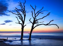 Botanikfjärd södra Carolina Lowcountry Trees arkivbilder