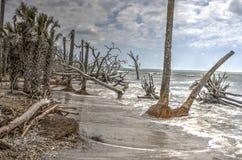 Botaniki plantaci Boneyard plaży Podpalany SC Zdjęcia Royalty Free