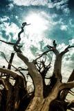 Botaniki zatoki plaża Fotografia Stock