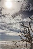 Botaniki zatoki plaża Zdjęcia Royalty Free