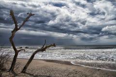 Botaniki zatoki plaża Fotografia Royalty Free