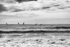 Botaniki zatoki plaża Obraz Royalty Free