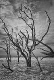 Botaniki zatoki plaża Zdjęcie Stock