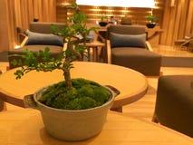 Botanikträdet och brunnsorten Royaltyfri Foto