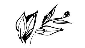 Botanique animée de dessin d'encre de calligraphie banque de vidéos