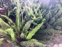 Botanique naturel d'usine pelucheuse verte avec de longues feuilles comme tropical exotique rare peu commun d'épines de la flore  photo stock