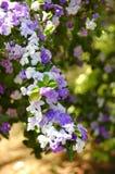 Botanisch Stock Afbeelding