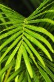 Botanisch Stockbild
