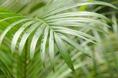 Botanisch Royalty-vrije Stock Fotografie
