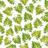 Botanisch bladeren naadloos patroon, groen, textielontwerp, op wit Stock Foto's