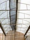 Botanisch dak stock afbeeldingen