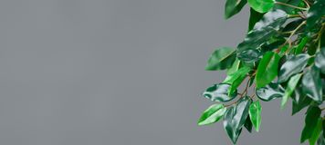 Botanisch het levensconcept stock fotografie