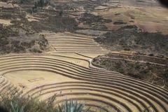 Botanisch laboratorium van Incas Royalty-vrije Stock Fotografie