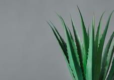 Botanisch levensstijlconcept royalty-vrije stock foto