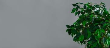 Botanisch levensstijlconcept stock fotografie