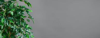 Botanisch levensstijlconcept royalty-vrije stock afbeelding
