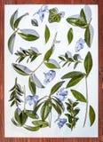 Botanisch minimalistic stilleven Bladeren en bloemen op een witte achtergrond Stock Foto's