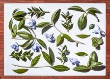 Botanisch minimalistic stilleven Bladeren en bloemen op een witte achtergrond Royalty-vrije Stock Fotografie