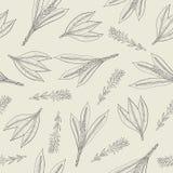 Botanisch naadloos patroon met kurkumabladeren en bloeiwijzen Kruidachtige die installatiehand met contourlijnen wordt getrokken royalty-vrije illustratie